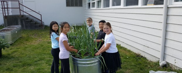 Under the leadership of Mme. Dare and others and with the help of our PAC and the school district, the Marlborough Garden is beginning to show signs of spring. There […]